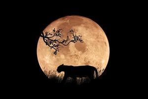 illustration av en tigersilhouette på natten foto