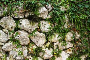 murgröna och stenar foto