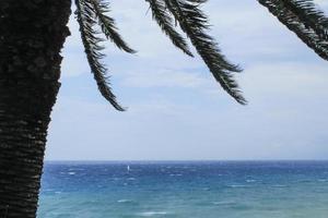 sommardag och palmträd foto