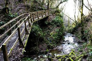 träbro i skogen foto