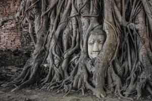 buddhahuvud i Ayutthaya foto