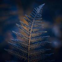 gröna och blå ormbunksblad i naturen foto