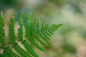 gröna ormbunksblad på våren foto