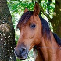 vacker brun häst porträtt foto