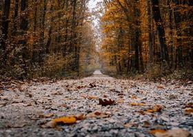 gångväg med låg vinkel som leder in i skogen foto