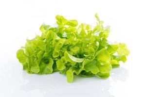 närbild grön ek på vitt foto