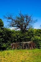 grenar och kalt träd foto