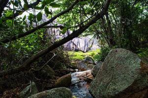 flod i en skog foto