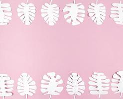 vita monstera papper lämnar på rosa bakgrund med kopia utrymme. foto