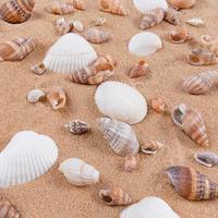 blandning av snäckskal på sandbakgrund. foto