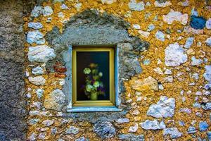 blommor i ett fönster foto