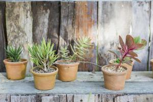 lerkrukor med kaktus foto
