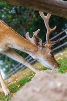 vilda hjortar naturliga livsmiljöer familjevänliga vilda parker foto