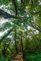 regnskog doi inthanon molnskog Chiang Mai Thailand foto