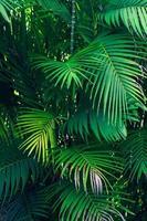 lämnar abstrakt palm tropiska löv färgglada blomma på mörk tropisk lövverk natur bakgrund mörkblå lövverk natur foto