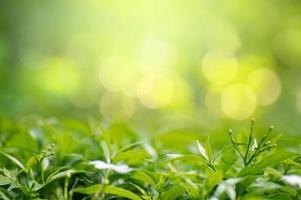 blad bakgrund bokeh oskärpa grön bakgrund foto