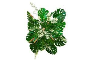 monsterblad som används i modern design tropiska lövlövverk buske blommarrangemang natur bakgrund isolerad foto
