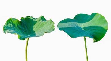 lotusbladisolat 2 samling av vit bakgrund foto