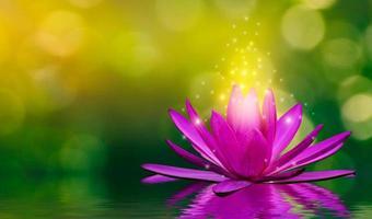 lila lotusblommor avger ljus som flyter i vattnet, naturlig grön bokehbakgrund foto