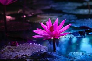 lotusrosa ljus lila flytande ljus gnistrande lila bakgrund foto