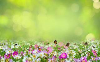 blomma blad bakgrund bokeh oskärpa grön bakgrund foto