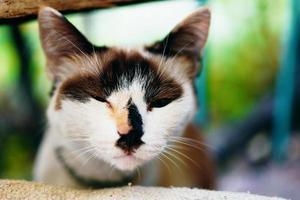 söt nyfiken vit katt med slutna ögon. foto