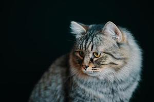 liten randig pussycat på mörk bakgrund foto