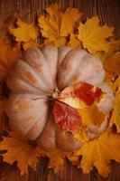 orange stor pumpa på färgglada höstlöv. foto