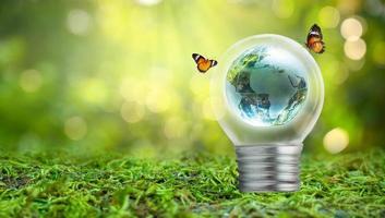 glödlampan ligger på insidan med lövskog och träden är i ljuset. begrepp för miljövård och global uppvärmning växter växer inuti lampa över torr foto