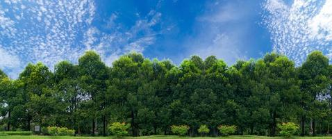 panorama träd klar himmel banner foto