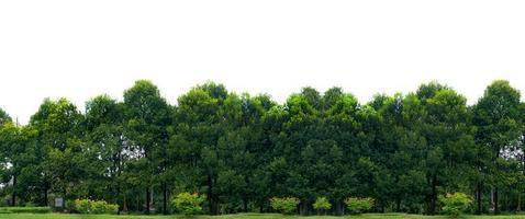 panorama träd vit bakgrund banner foto