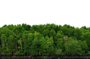 panorama träd vit bakgrund banner isolera foto