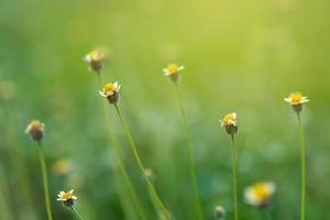 blad suddar färskt grönt gräs grunt Dof naturliga gröna växter landskap med som bakgrund eller tapet foto