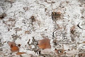 närbild trä textur bakgrund foto