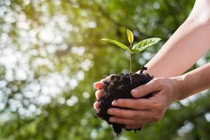 bondens hand som håller plantor på bokehbakgrund foto