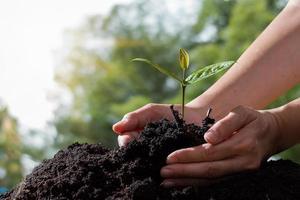 bondens handinnehav av plantor på grön bokehbakgrund foto