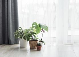 olika husplanter på golvet foto