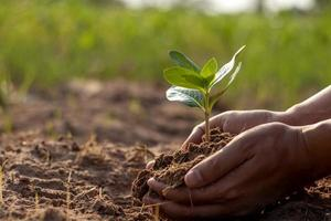 träd och mänskliga händer som planterar träd i markbegreppet omskogning och miljöskydd. foto
