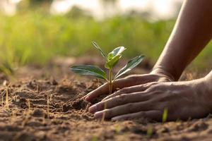 mänskliga händer som planterar plantor eller träd i jordens jorddag och global uppvärmningskampanj. foto