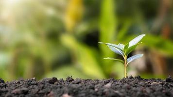 små träd växer naturligt, begreppet kvalitetsträdplantning och hållbar skogsåterställning. foto