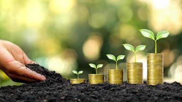 händer som lägger jord på träd som växer på guldmynt och naturlig bakgrund. begreppet framgångsrik ekonomisk tillväxt och företagsledning. foto