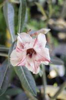 minimal blomträdgård hemma foto