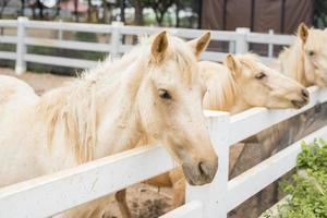 hästar i fältet foto