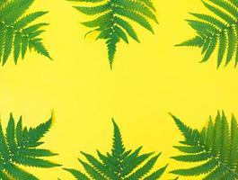 gröna ormbunksblad på gul bakgrund med kopieringsutrymme. foto
