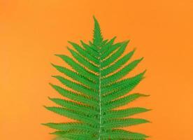 grönt ormbunkeblad på orange bakgrund i mitten. foto