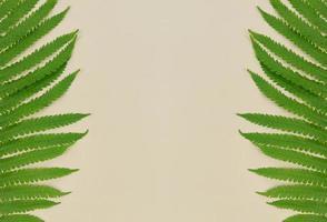 gröna ormbunksblad på beige bakgrund med kopieringsutrymme. foto
