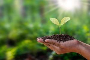träd planteras på marken i mänskliga händer med naturliga gröna bakgrunder, begreppet växttillväxt och miljöskydd. foto