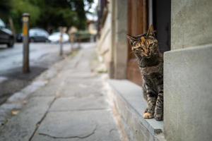 en katt på gatorna i Florens foto