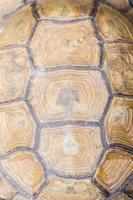 aldabra jätte sköldpadda foto