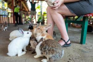 flickor matar kaniner i djurparken foto